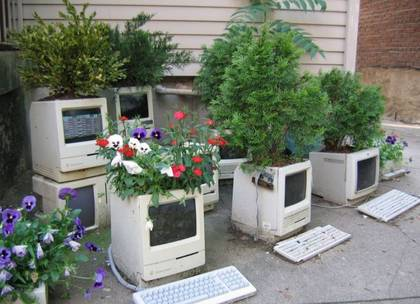 Computer Forest picture