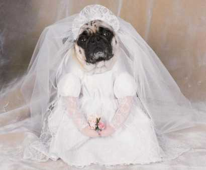Funny dog pics dog bride funny dogs for Wedding dress for dog
