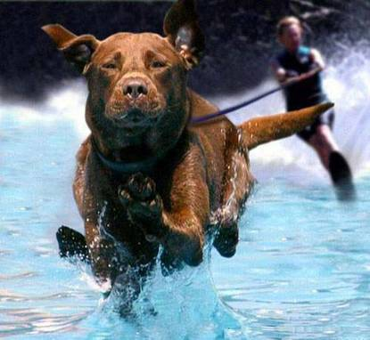 Dog Surf Engine