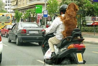 Dog in traffic