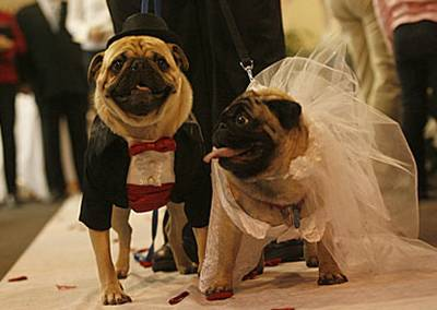 Dog wedding picture