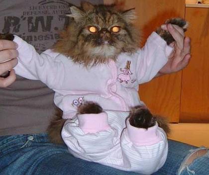 Funny cat suit