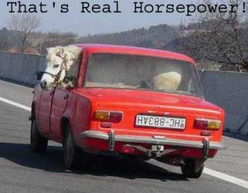 the real horse-power