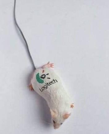 Funny Logitech Mouse