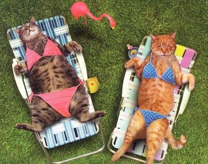 fun fat cat