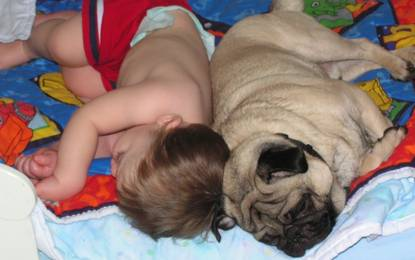 Funny sleeping dog and child