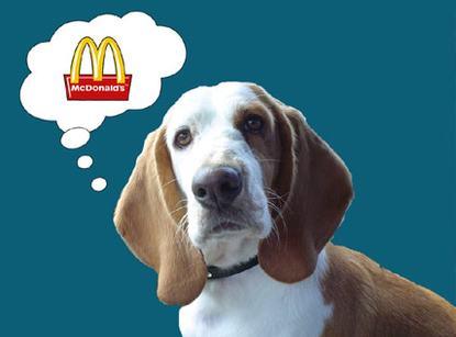 McDonalds dog