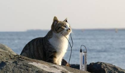 Sony cat