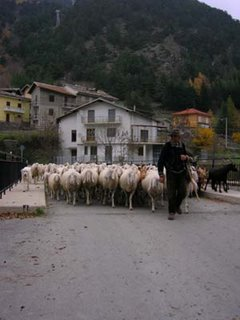 sheep in Chambons