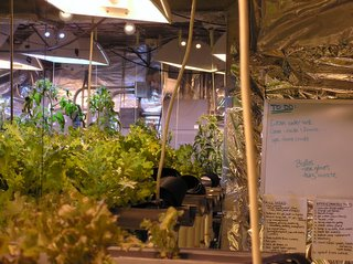 Inside the McMurdo Greenhouse