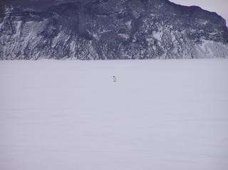 Learning to anchor tents on bare ice