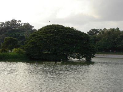 Lal Bagh Bangalore Lake