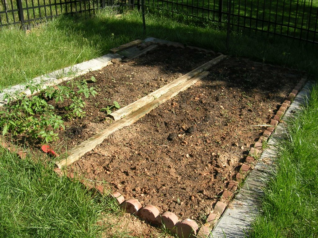 Gardening 101 | Daily Musings - Everyday Recipes and More