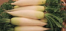 A picture of some daikon radishes