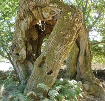 árvore depois