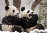 赠台大熊猫团团、圆圆。