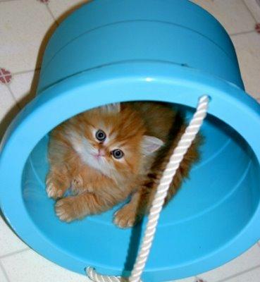 my cute naughty funny cat