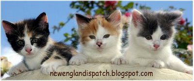 cute funny cat pictures