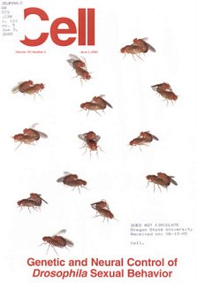 Cover of the journal Cell June 3, 2005 showing gay fruit flies having sex