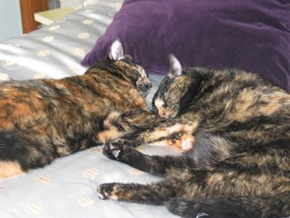 two tort cats