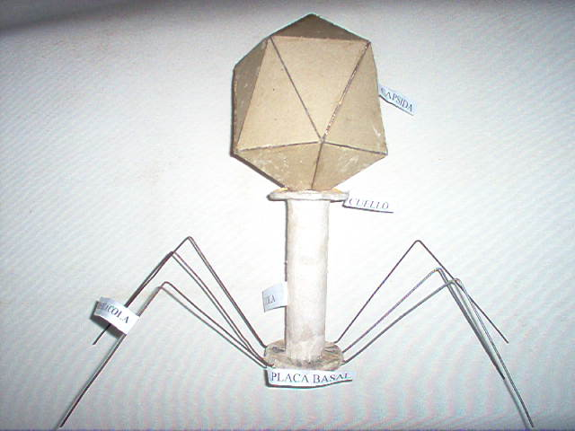 Gil Fortoul. Biología Sección 1F: ¿Cómo elaborar una maqueta