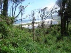 Exuberante vegetación en la isla de Abtao
