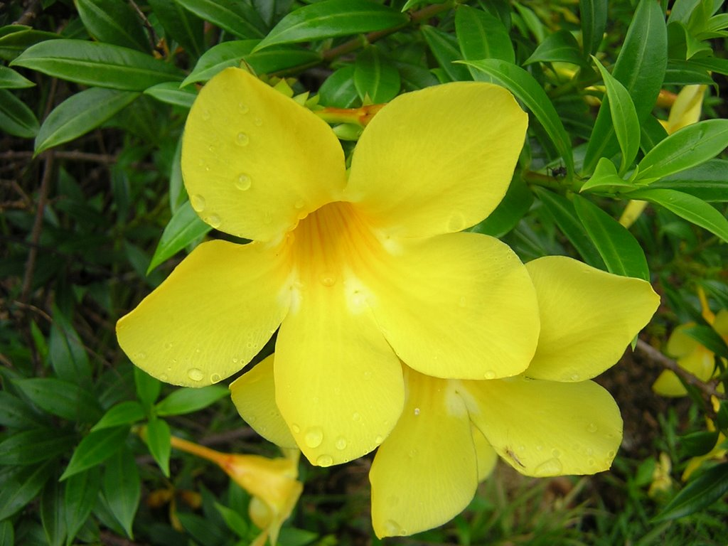 Names Of Yellow Flowers With Pictures This With Names Of