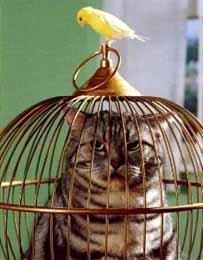 caged-cat-and-canary.jpg