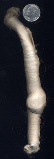 Silk carrier rod.