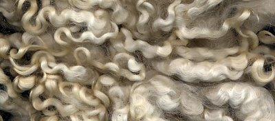 Lovely Leicester  Longwool fleece.