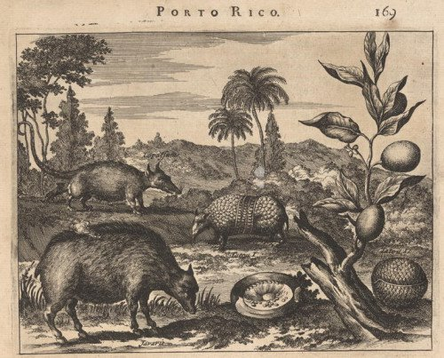 armadillo and stylised mammals in Porto Rico (S.America)