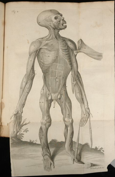 Bibliodyssey The Anatomy Of A Pygmie