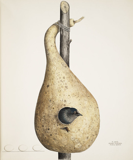 bird's nest with bird's head sticking out - lithography