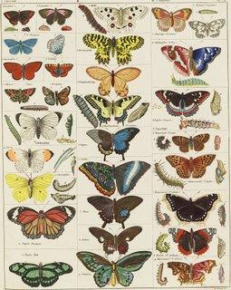 Mackinac Island Butterfly House Seasons