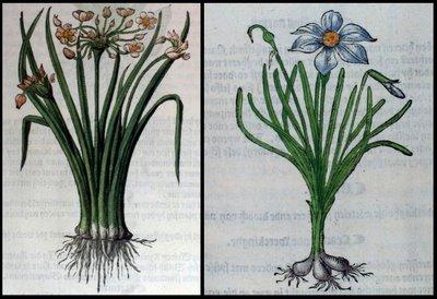 2 flowering plants