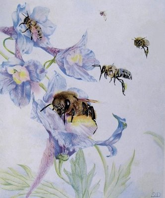 EJ Detmold - Maeterlinck bee sketch