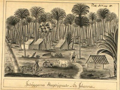 Sketch of jungle at Surat - Swedish East India Company