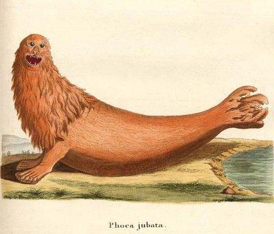 Phoca jubata