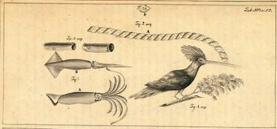 Surat - bird and squid - Swedish East India Company