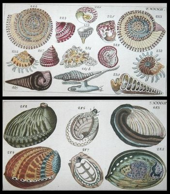 shell book 1813