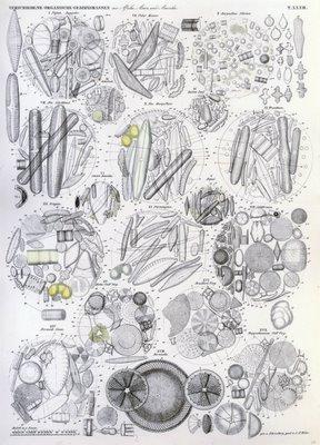 Verschiedene Organische Gebirgsmassen aus Afrika, Asien und Amerika