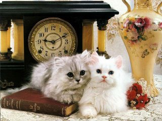 صور القطط الجميلة Cat_539