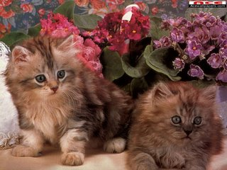 صور القطط الجميلة Cats_019