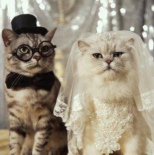 صور القطط الجميلة F1