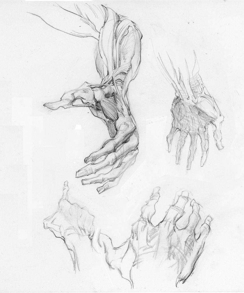 TuesdayArtGroup: Anatomy Hands