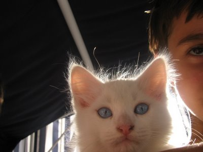 Pet Pictures: A Fuzzy Cat Picture