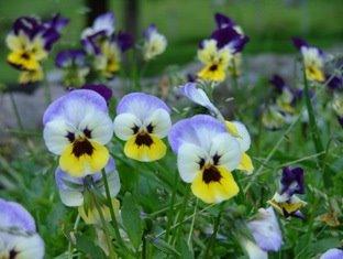 Diversidad de flores de colores