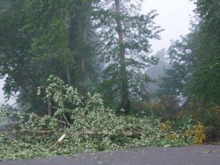 treefall from Spring storm (c) KR Silkenvoice