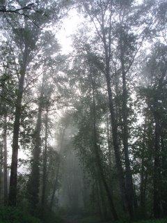 Hall of Trees (c) KR Silkenvoice