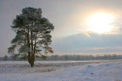 Wateren, Drenthe, The Netherlands, December 2005